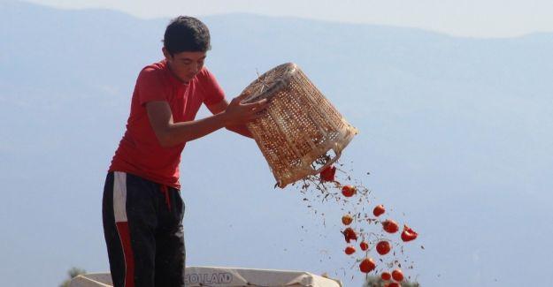 Rusya'nın domates açıklaması üreticiyi umutlandırdı