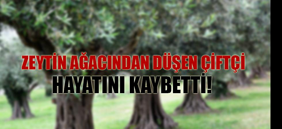 Zeytin ağacından düşen çiftçi hayatını kaybetti