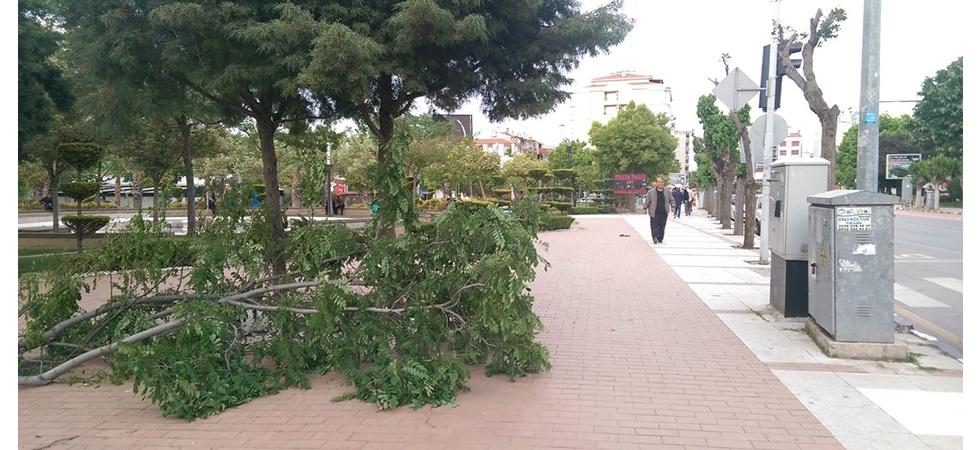 Manisa'da şiddetli rüzgar ağaçların kırılmasına ve devrilmesine neden oldu
