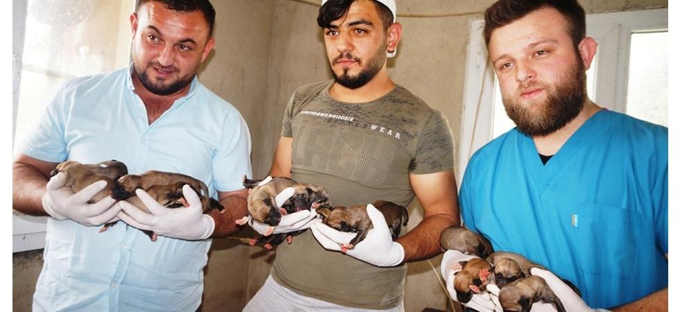 Sarıgöl'de bir köpek 18 yavru doğurdu