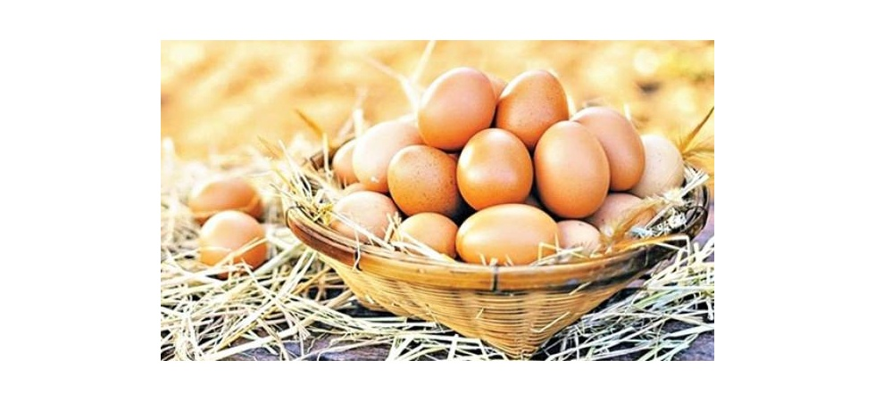 Yumurtacı Irak'tan umudunu kesti! Yeni rota Afrika