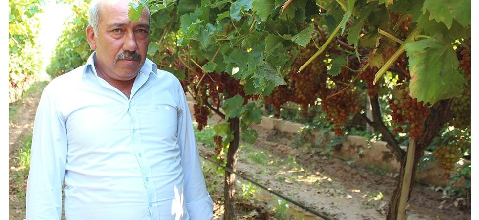 Alaşehir'de 300 üretici iyi tarım uygulamaları yapıyor