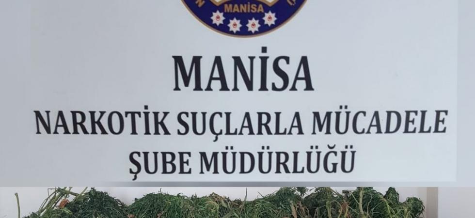 Manisa'da 23 kilo esrar ele geçirildi