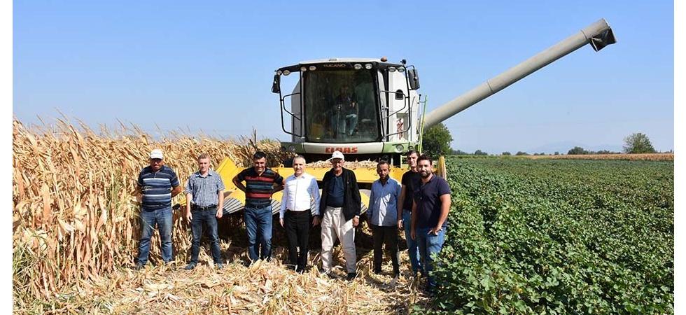 Manisa'da mısır hasadı başladı