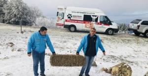 Spil'de yaban hayvanları için yem bırakıldı