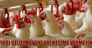 Uyarı geldi! Tavukları kesime vermeyin