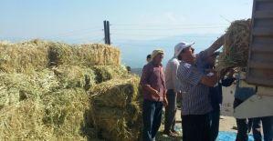 Alaşehir Belediyesinden hayvancılığa yem desteği