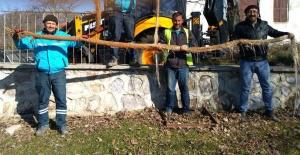 Manisa'da 5 Metrelik Ağaç Kökü Görenleri Şaşırttı