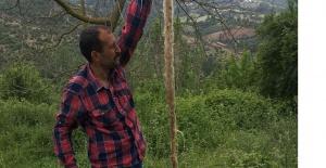 İçme Suyu Hattından 3 Metrelik Ağaç Kökü Çıktı