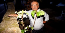 Sarıgöl'de armut ağacı Eylül ayında çiçek açtı