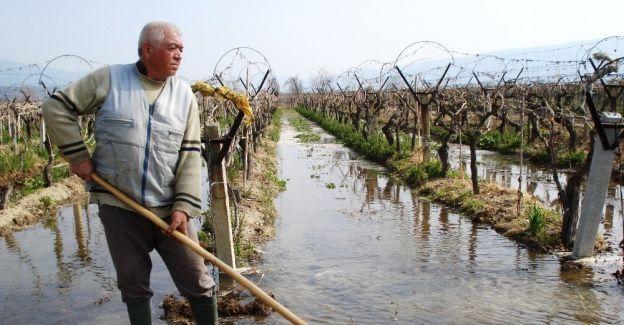 Sarıgöl'de üzüm bağları sulanmaya başladı