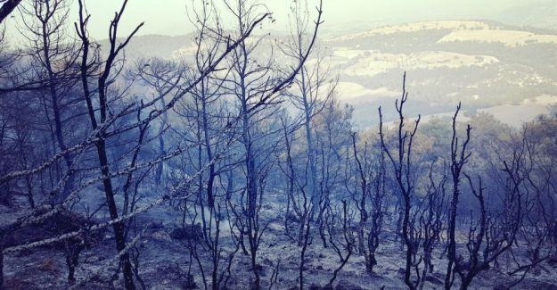 Selendi'de 80 dönüm kızılçam ormanı kül oldu