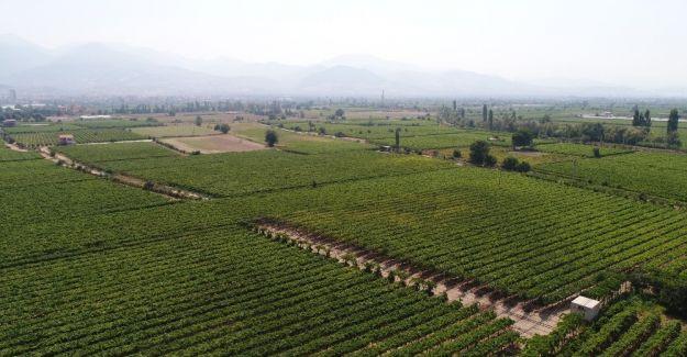 Türkiye'nin organik ürünleri Manisa'dan