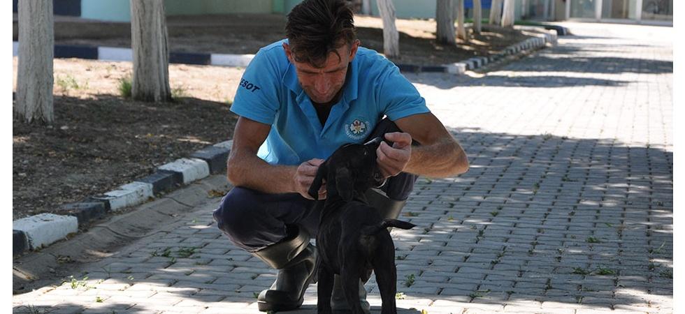 Kazazede felçli köpek hayvan barınağında sağlığına kavuştu