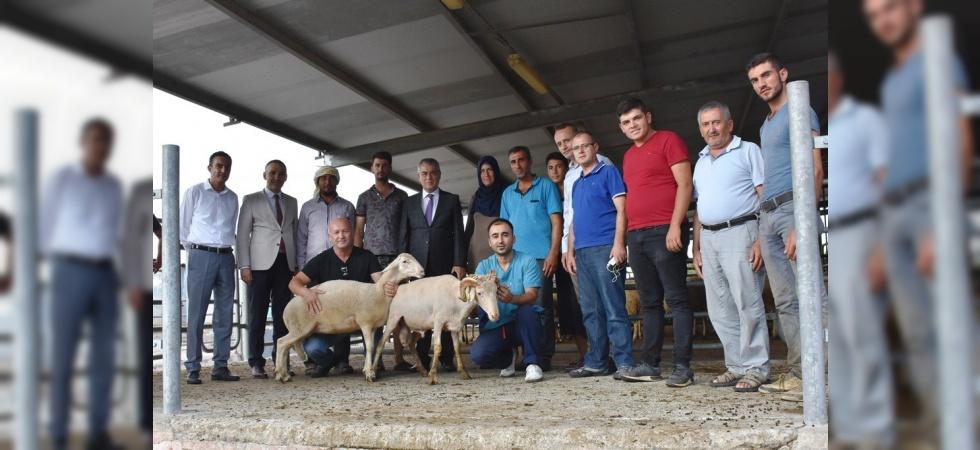 Genç çiftçilere küçükbaş hayvanları teslim edildi