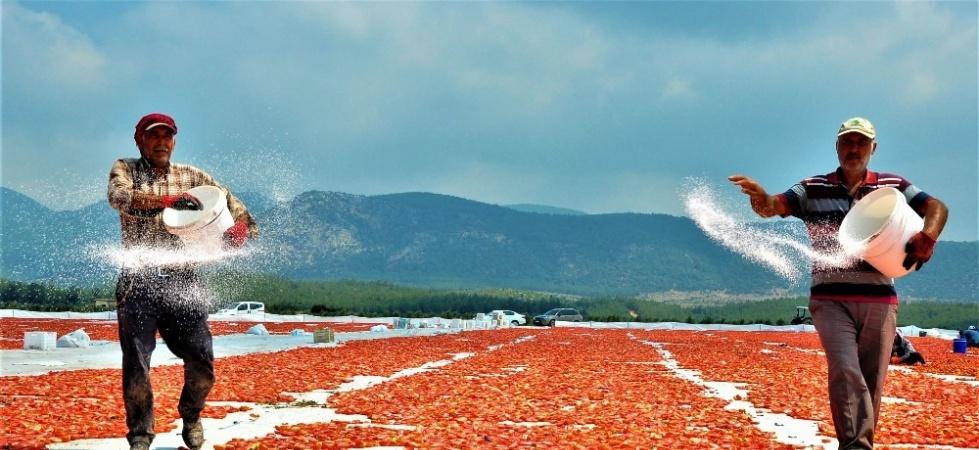 Korona sebebiyle ekim yapamayan ülkelere kurutulmuş domatesler Manisa'dan