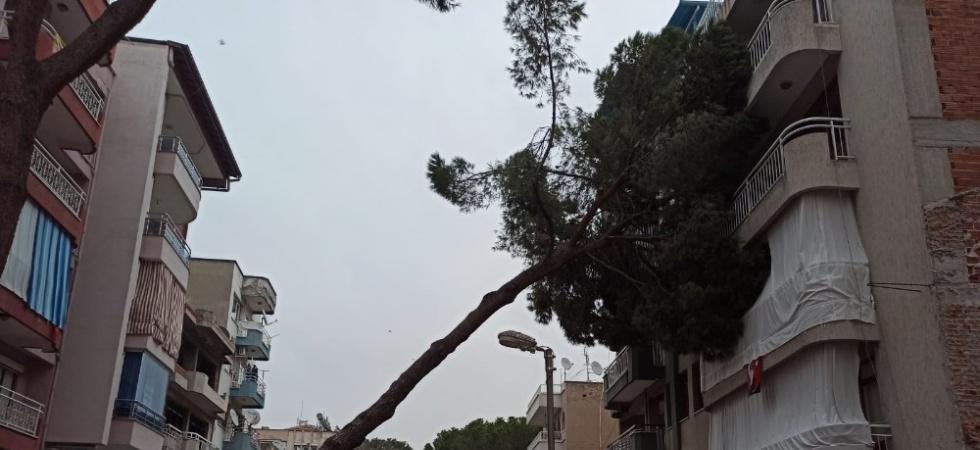 Asırlık çam ağacı apartmanın üzerine devrildi