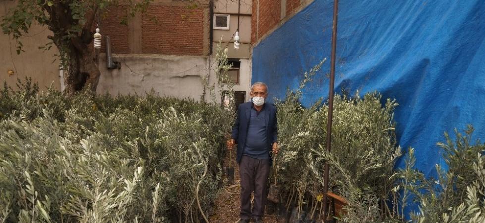 Sarıgöl Ziraat Odasından çiftçilere sekiz bin zeytin fidanı
