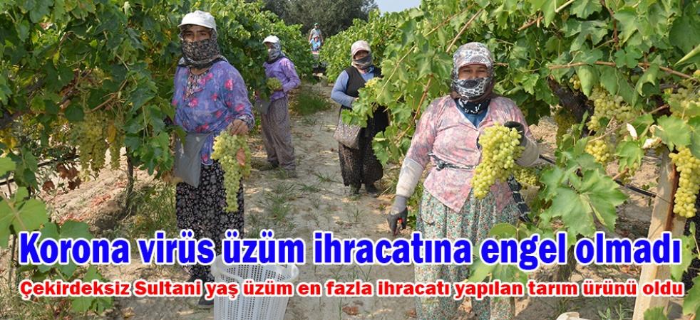 Korona virüs üzüm ihracatına engel olmadı
