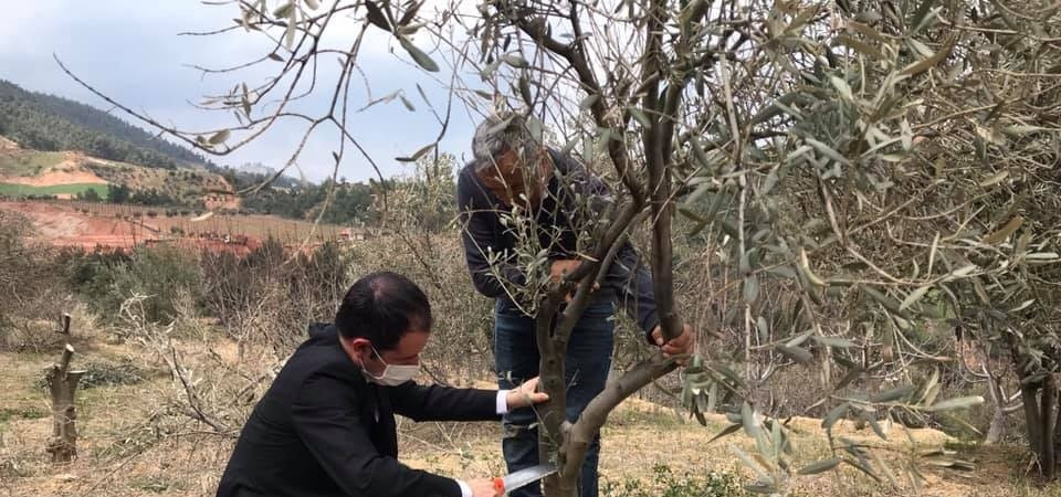 Alaşehir'de Tarım ve Orman Müdürlüğü ekiplerinden tarım alanlarında inceleme