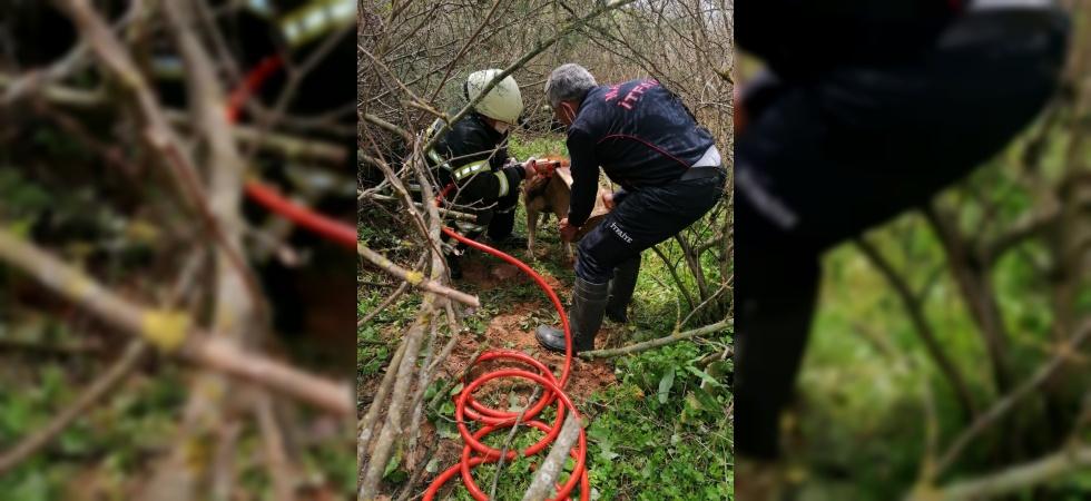 Başına teneke sıkışan köpeği itfaiye kurtardı