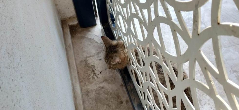Kafası kapıya sıkışan kedi kurtarıldı