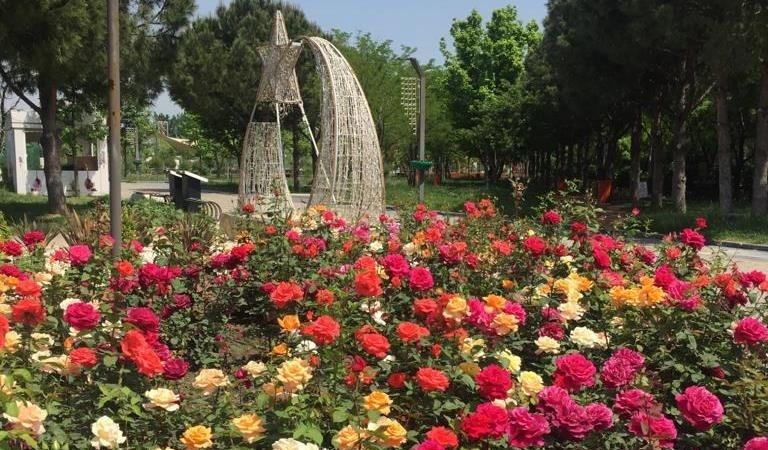 Park ve yeşil alanlar çiçek gibi oluyor