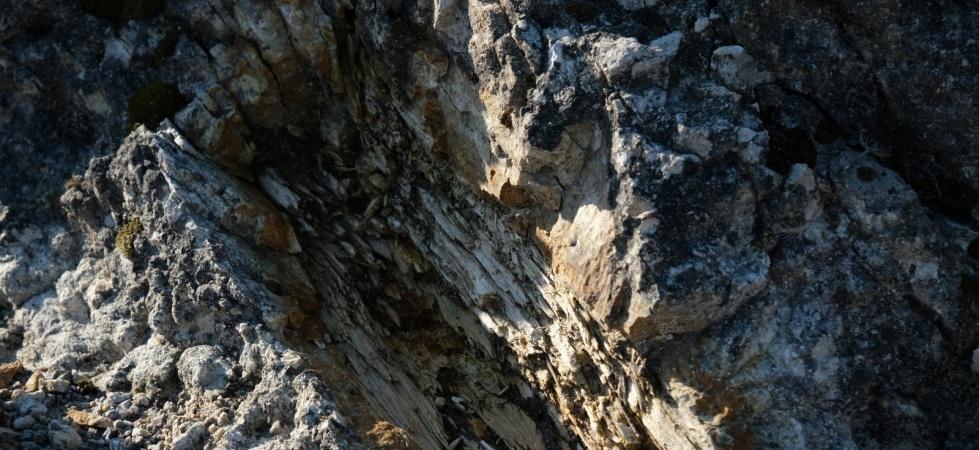 (Özel) 25 milyon yıllık fosil ağaç ormanı ilgi bekliyor