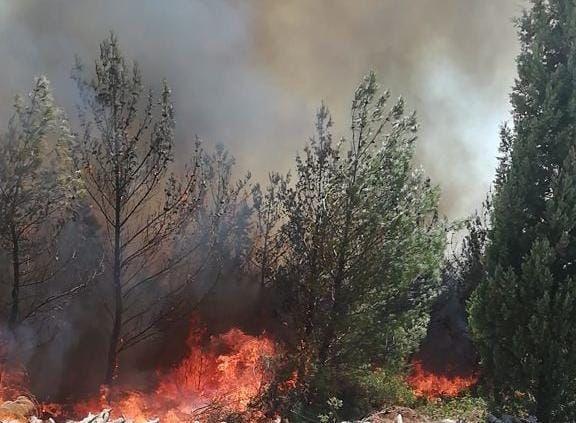 Akhisar'daki orman yangını kontrol altına alındı