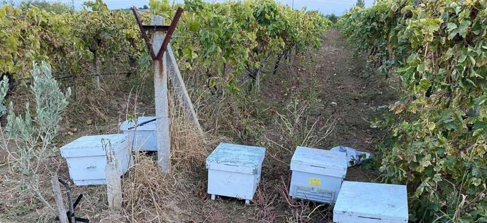 Arı kovanına dadanan hırsızlar yakalandı