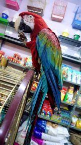 Bu papağanın fiyatı dudak uçuklatır