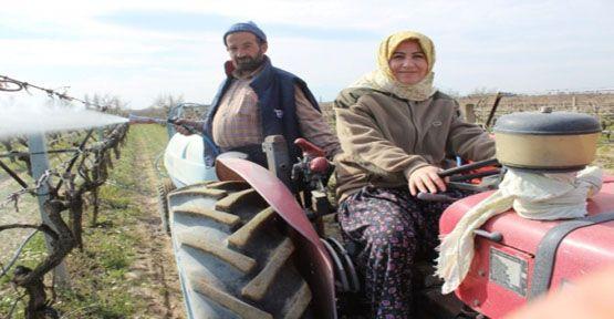 Kasap, Traktör Kullanıp Üzüm Bağlarını İlaçladı