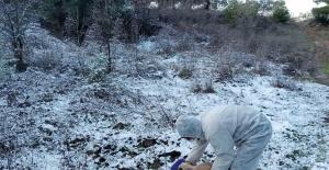 Salihli Belediyesi karlı havada sokak hayvanlarını unutmadı