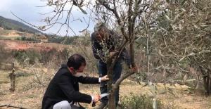 Alaşehirde Tarım ve Orman Müdürlüğü...