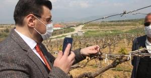 Don zararı yaşayan üreticileri sahada dinlediler