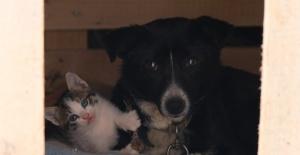 Kedi yavrularına bakıcılık yapan köpek yürekleri ısıttı