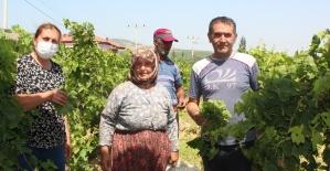 Sezon öncesi asma yaprağı üreticinin ek geliri oldu
