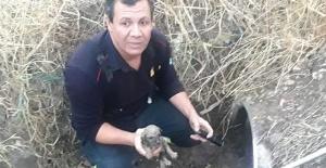 Manisa İtfaiyesi yavru köpekleri kurtardı