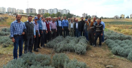 Yunusemre Belediyesinden lavanta üretimine büyük destek